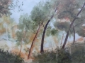 mallorcan-pines