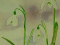 mas-day-snowdrop-card