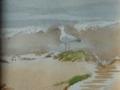 sidmouth-beach-north