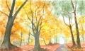 autumnwoodland