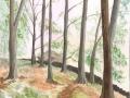 Dales-Wood